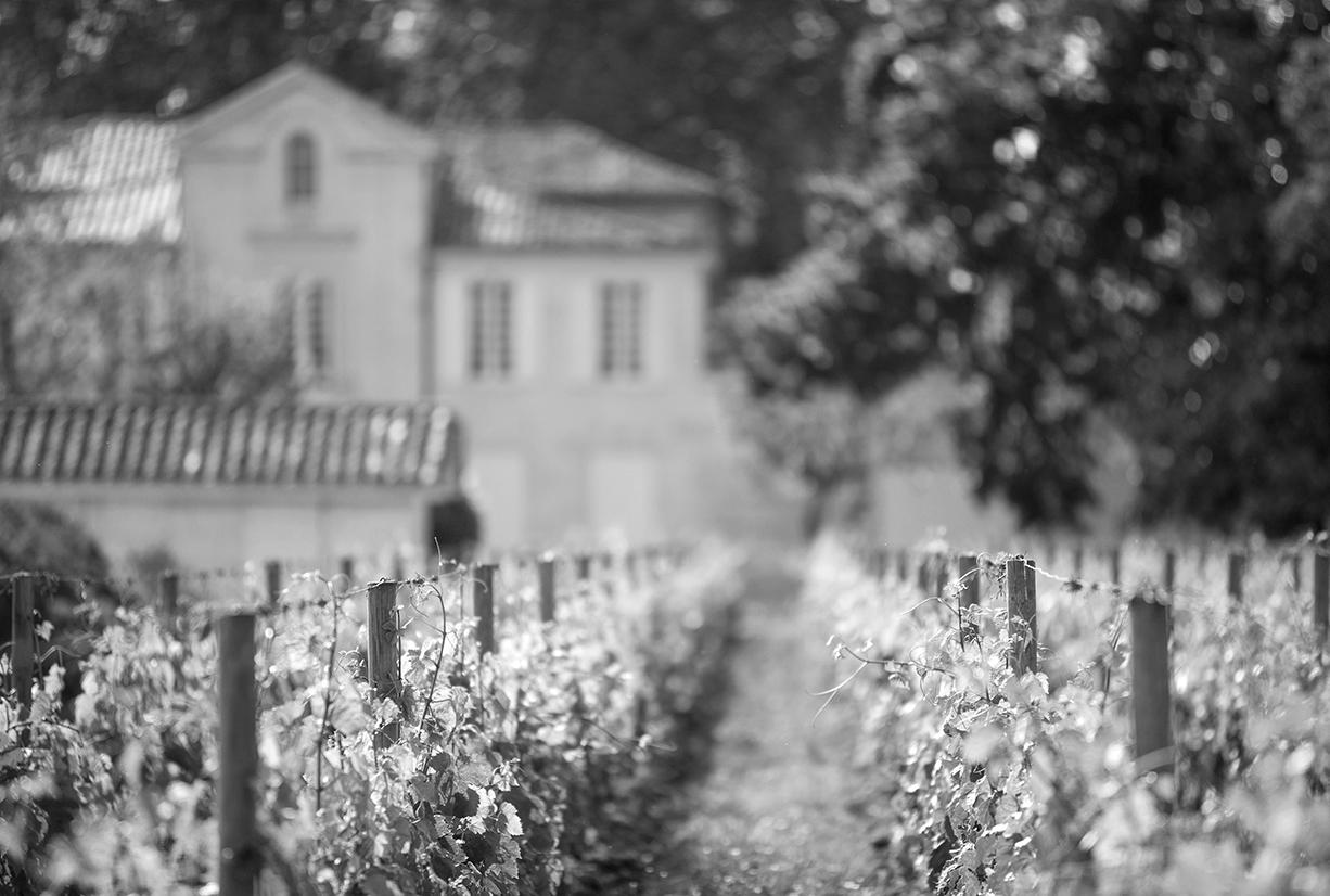 Ecosystème vigne chateau La Pointe